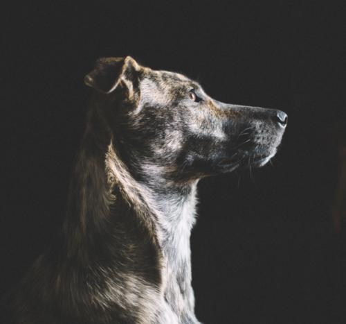 The dog wash charleston dog groomer screen shot 2017 09 27 at 42456 pmg solutioingenieria Choice Image