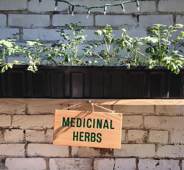 medicinalherbgarden.png