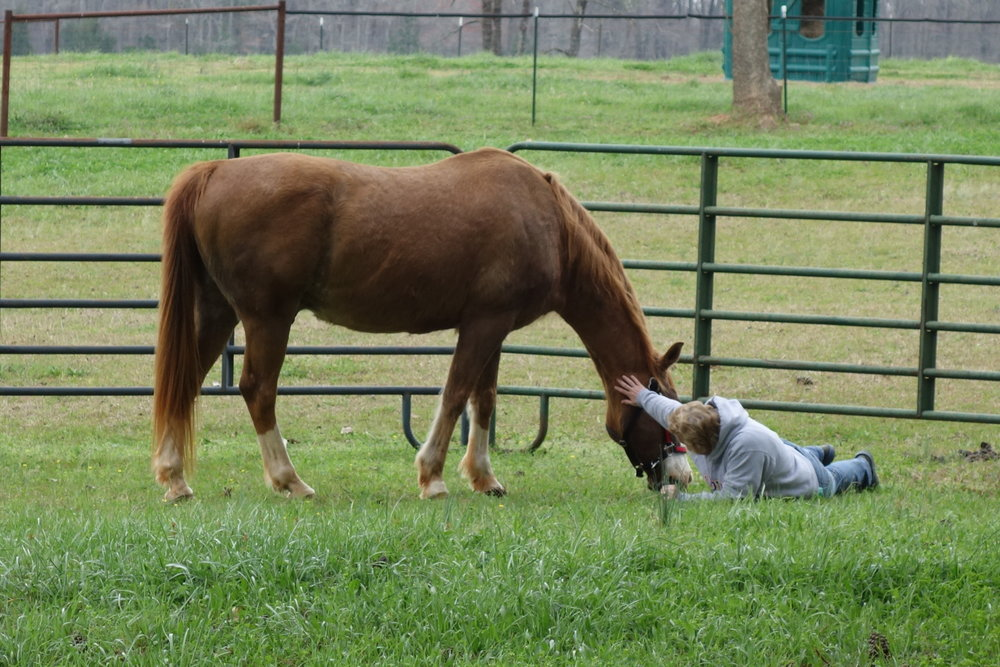 An Intimate Equine Encounter -             Trusting ~ Authentic ~ Congruent