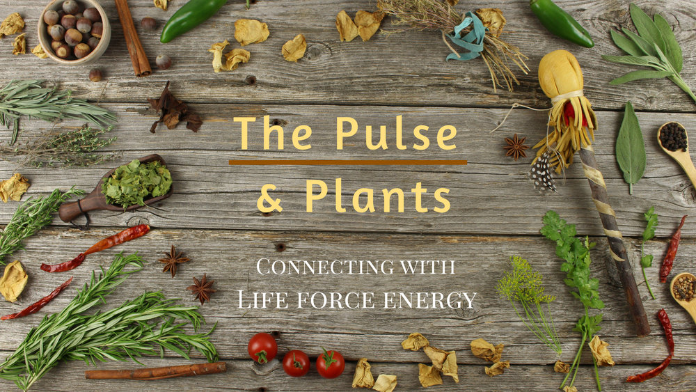 The Pulse & Plants - Connecting With Life Force Energythis gathering will be focused on developing a deeper relationship with spirit through drumming and plant medicines