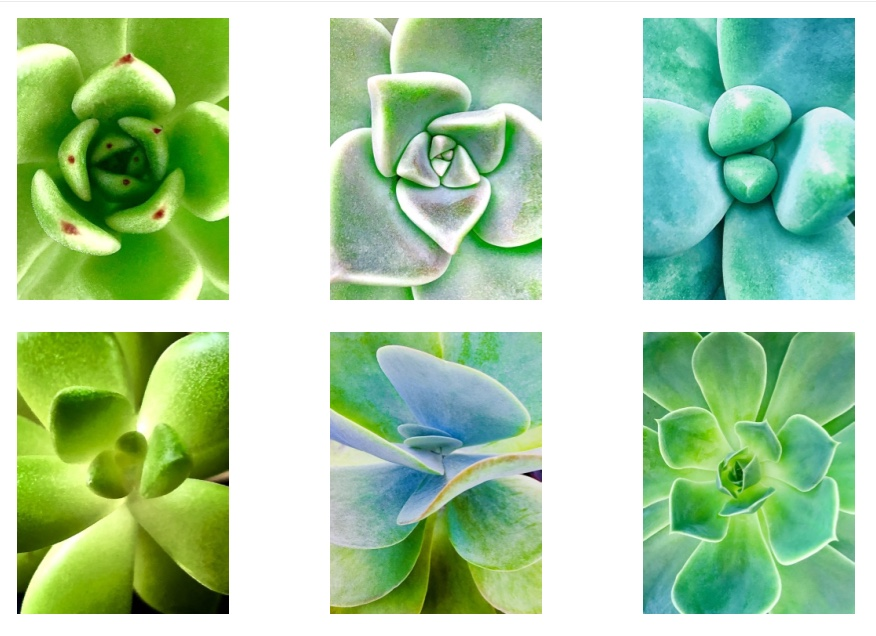 Succulent Metal Prints :  $795. (Set of 4)