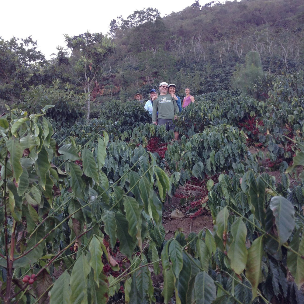 Hiking in the coffee fields, Brenda, Bob, Donna, Sue.
