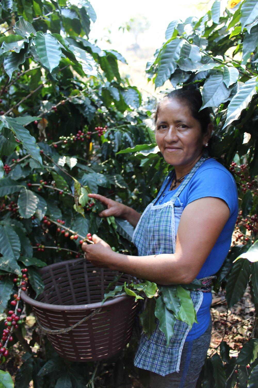 Juanita picking.jpg
