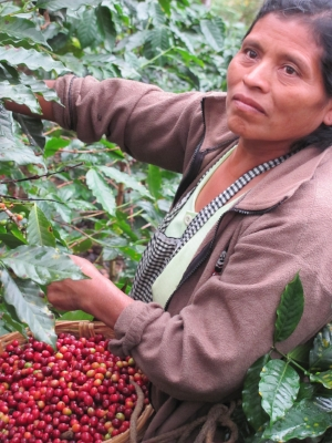 Fabiana picking coffee.JPG