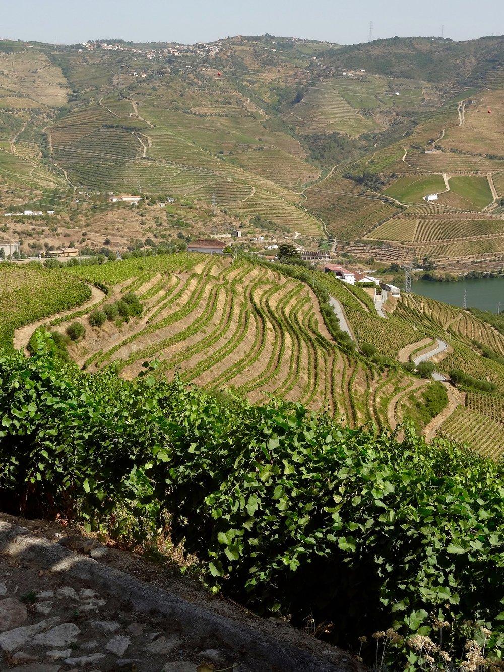 winery-hillsideview.jpg