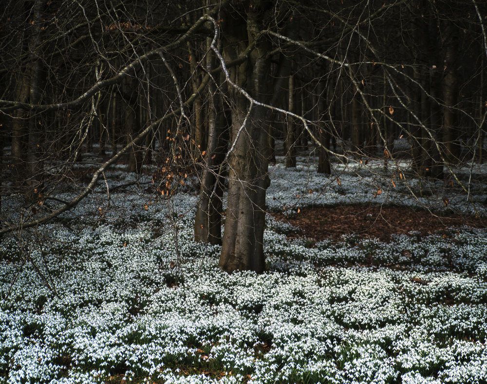 matt-holland_snowdrop darkness.jpg