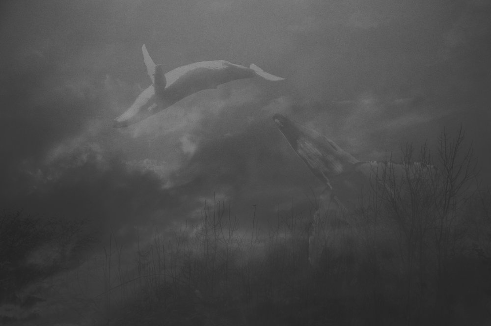 Whales in the Fog LR.jpg