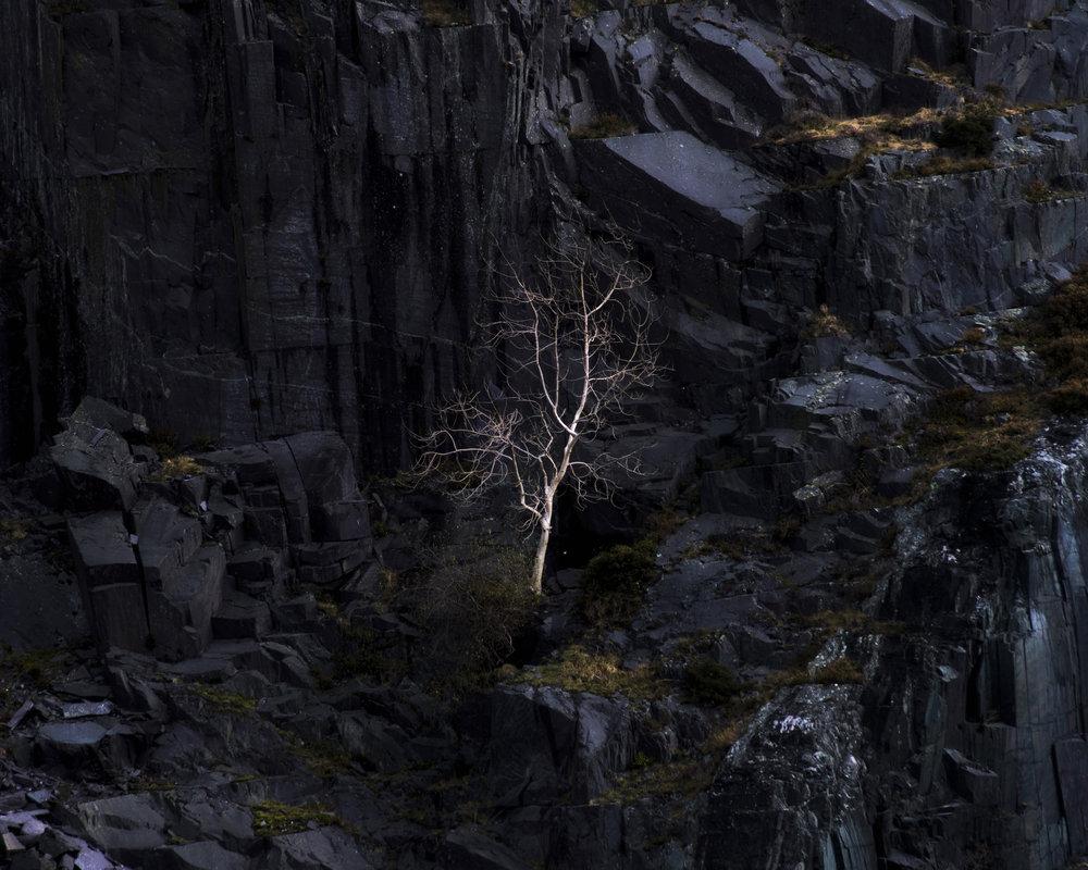 Little Dinorwic Tree - Matthew Holland.jpg