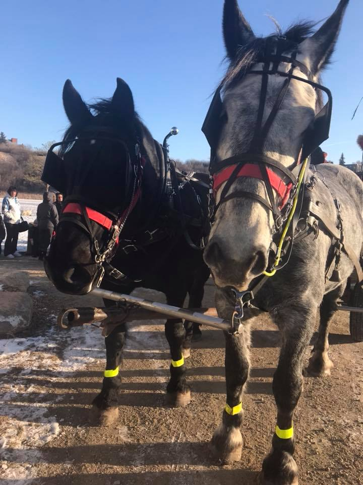 Come on down to the Kiwanis Pavilion for our annual Winter Wagon Rides featuring the Prairie Percherons. It's a great way to start New Years Eve celebrations with the family. Event runs from 3-7pm. Hot cocoa will be served. Suggested donation of $2.00 per rider.