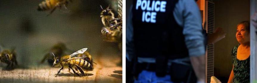 bees_ice.jpg