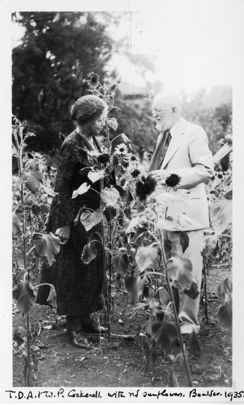 """In this 1935 photograph, botanist Wilmatte Porter Cockerell (1871-1957) is shown with biologist Theodore Dru Alison Cockerell (1866-1948), whom she married in 1900. In 1901, he named the ultramarine blue chromodorid Mexichromis porterae in her honor. Before and after their marriage in 1900, they frequently went on collecting expeditions together and assembled a large private library of natural history films, which they showed to schoolchildren and public audiences to promote the cause of environmental conservation."" Unidentified Photographer. Public Domain. Available online here: https://www.flickr.com/photos/smithsonian/3378207203/in/photolist-4WhxBp-9nw5JN-9nw5M1-69AjNm-69wciM"