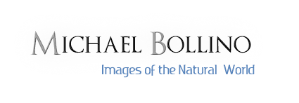 Michael Bollino Photography