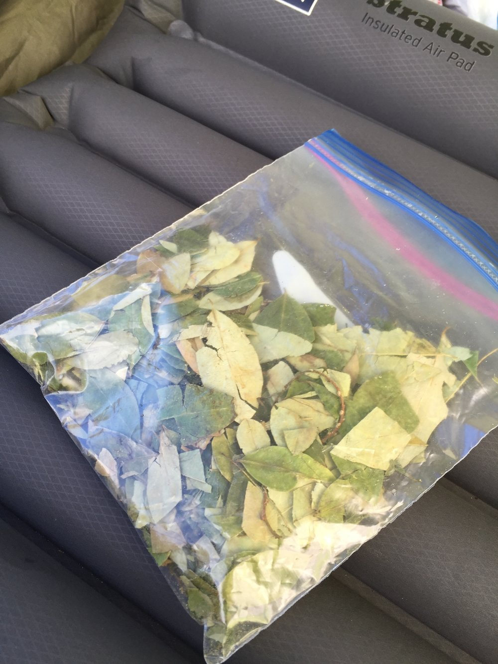 Our little supply of coca leaves. We brought some just in case. It's well known to combat the effects of altitude, provides a mild jolt of energy, and helps digestion. I ended up only chewing it once.
