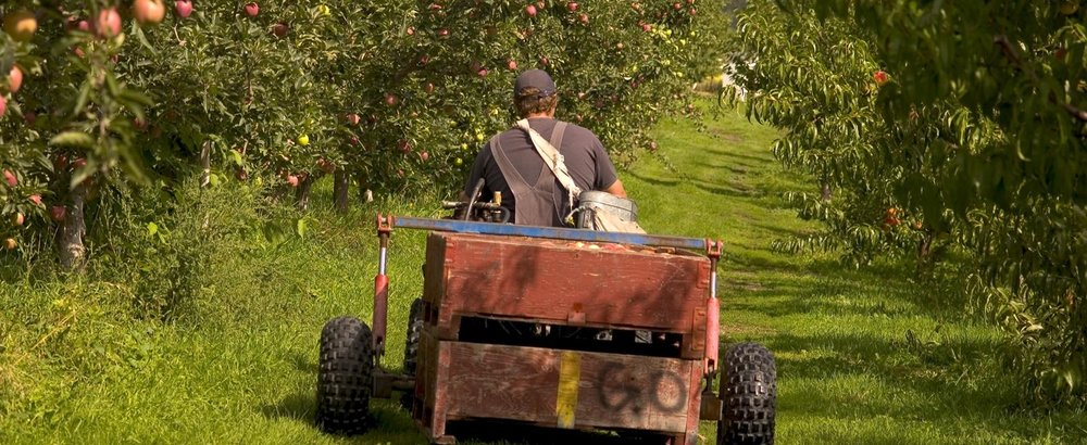 Working the Orchards    In Oyama at Gatzke's