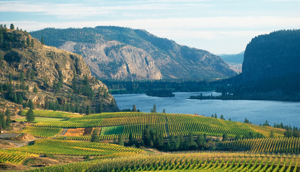 The Vineyards of OK Falls and Vaseux Lake