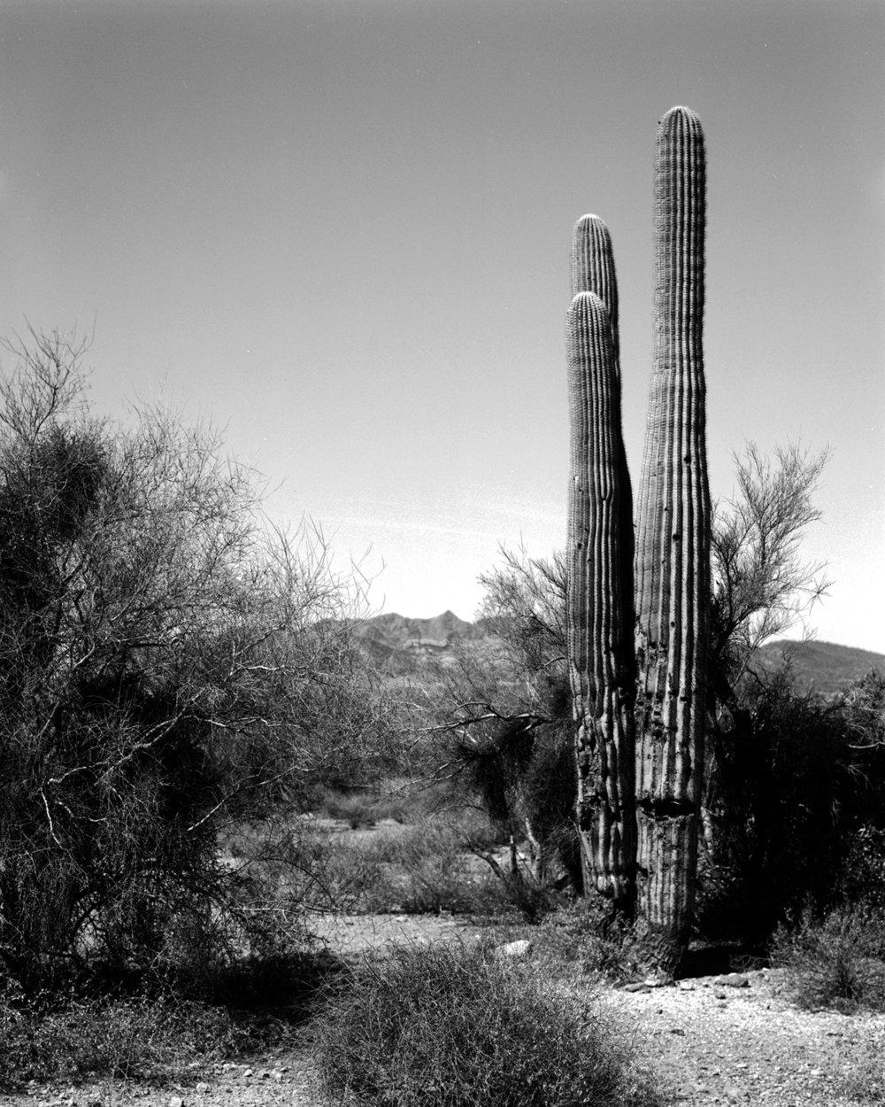 Saguaro2.jpg