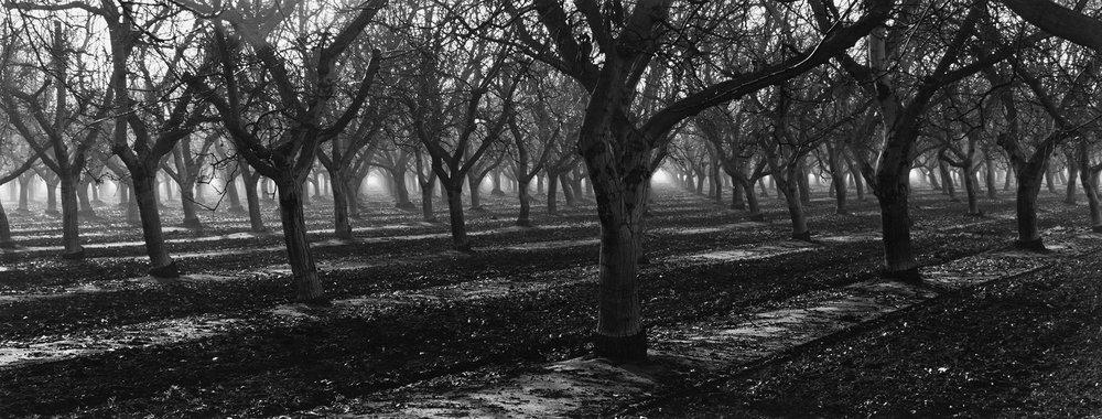Orchard, Visalia, CA, 2007.jpg