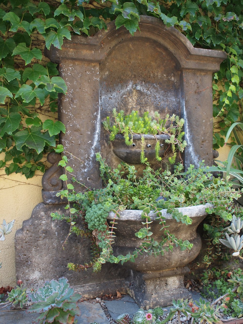 A fountain re-puroposed as a succulent planter.