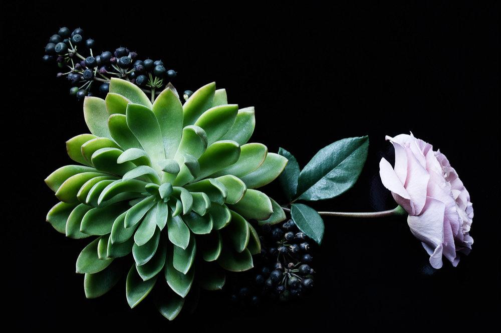 ©MHP_flora-3.jpg