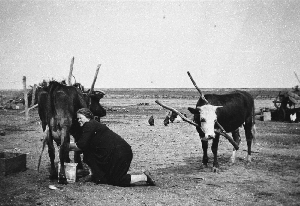 Farming Woman.jpg