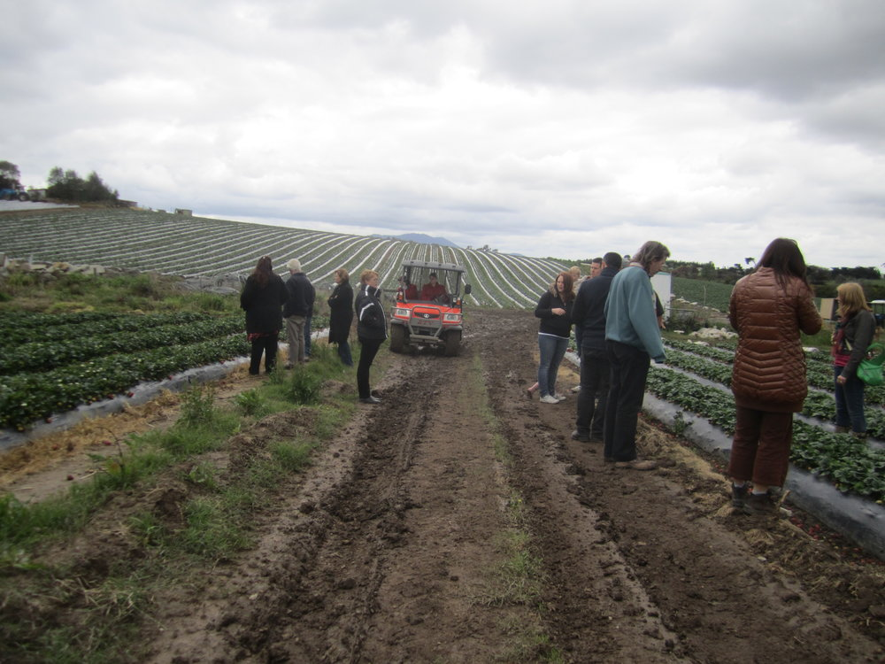 WinHort farm walk at Violi Strawberry Farm, 2013, image supplied.