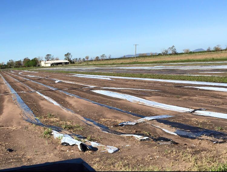Aftermath of Cyclone Debbie at Stackelroth Farms, image supplied (Stackelroth Farms, Facebook)