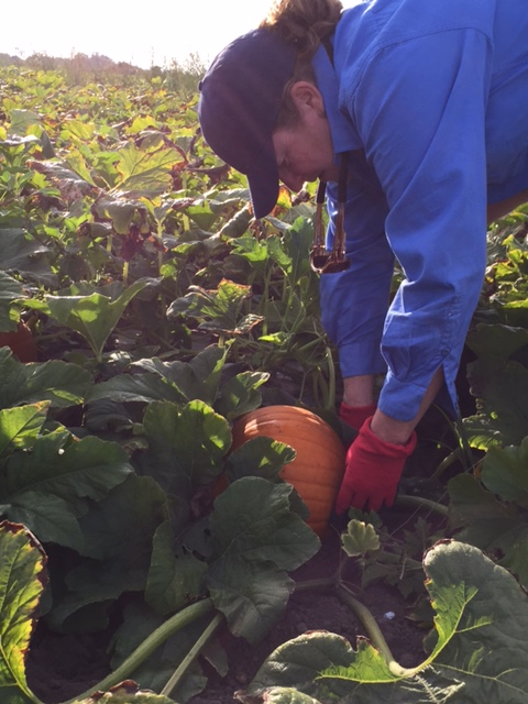 Michelle tending to pumpkins, image supplied (Stackelroth Farms, Facebook).