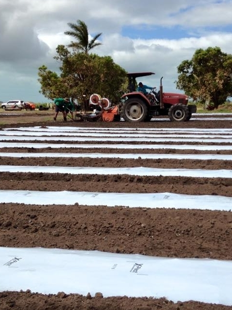 Recovery works at Stackelroth Farms following Cyclone Debbie, image supplied (Stackelroth Farms, Facebook).