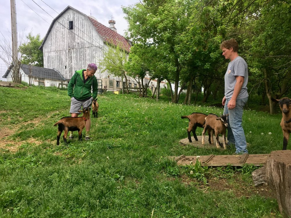 Longtime participants of Jaclyn's research, Lori and Leann, with goats on their Wisconsin farm where they run  Lucky Dog Farm Stay.  They also own a local food restaurant in their town,  Cow and Quince,  a means to support other farmers and a safe space for members of the LGBT+ community, image supplied.