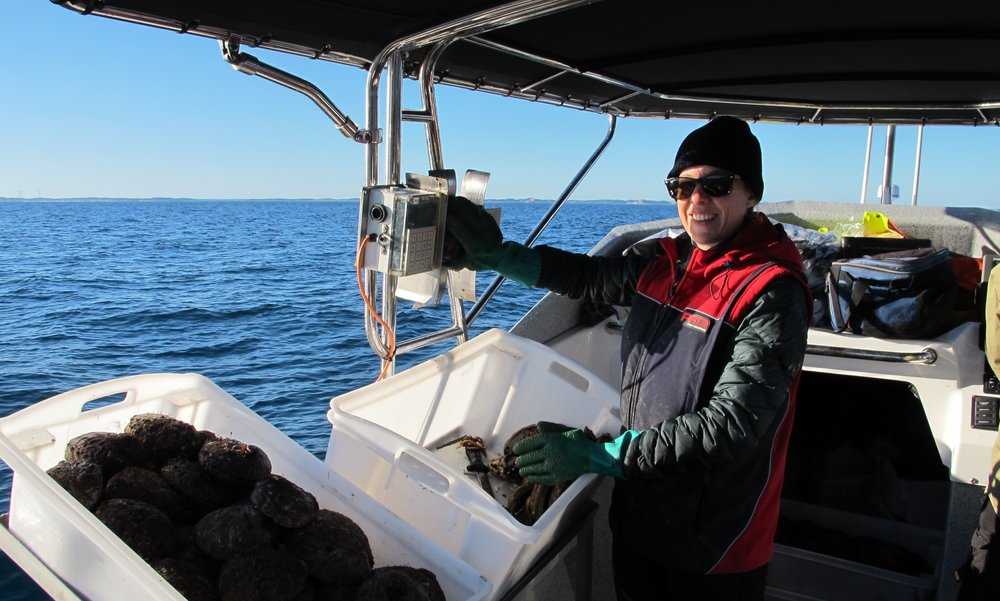 Kirsten out abalone diving at Lady Percy Island, Port Fairy, 2017. Kirsten's job as 'deckie' is to meaure each abalone (industry-led data collection used to monitor the fishery) and pack them for sale as a live product, image supplied.