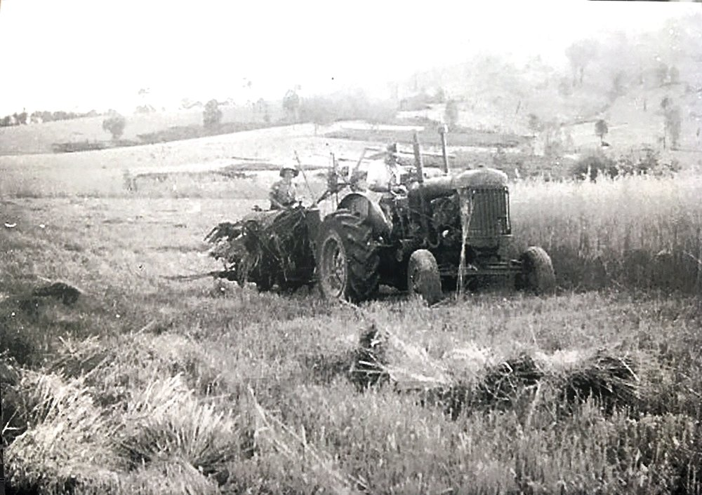 Mira helping her Dad (Michael Galvin) harvesting oats, 1952. Photo: supplied by Aileen Spangaro