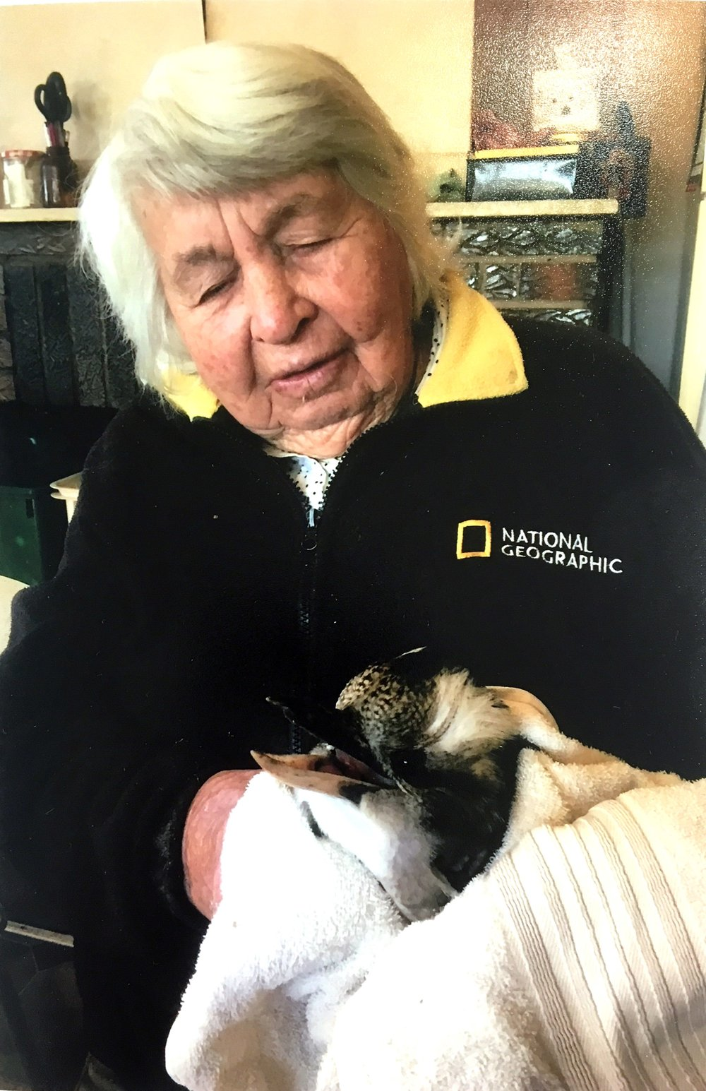 "Mira Galvin taking care of an injured kookaburra, ""Coralya"", 2018. Photo: supplied by Aileen Spangaro."