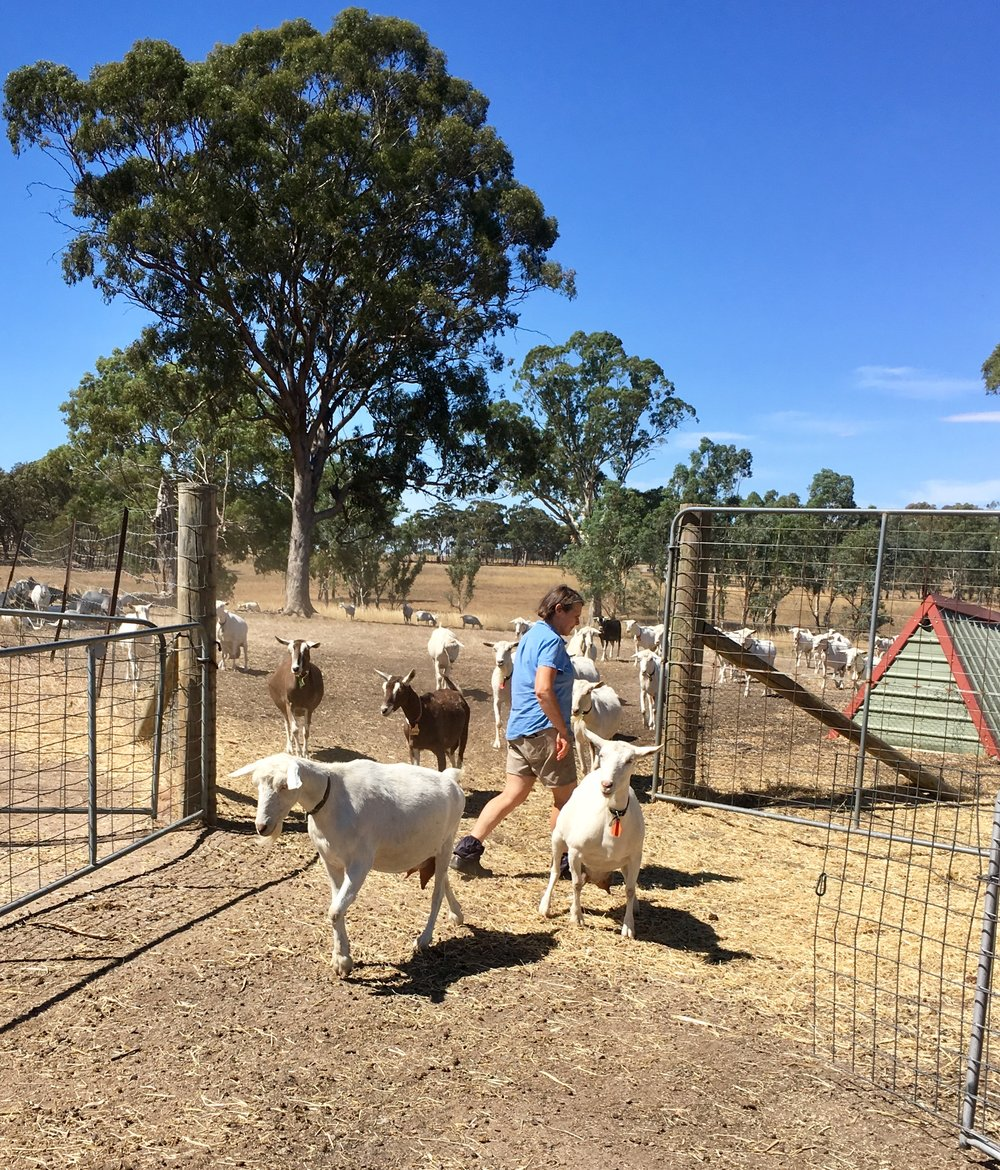 Ann-Marie working at Holy Goat Farm, Castlemaine, image taken by Jaclyn during her farm visit in 2018.