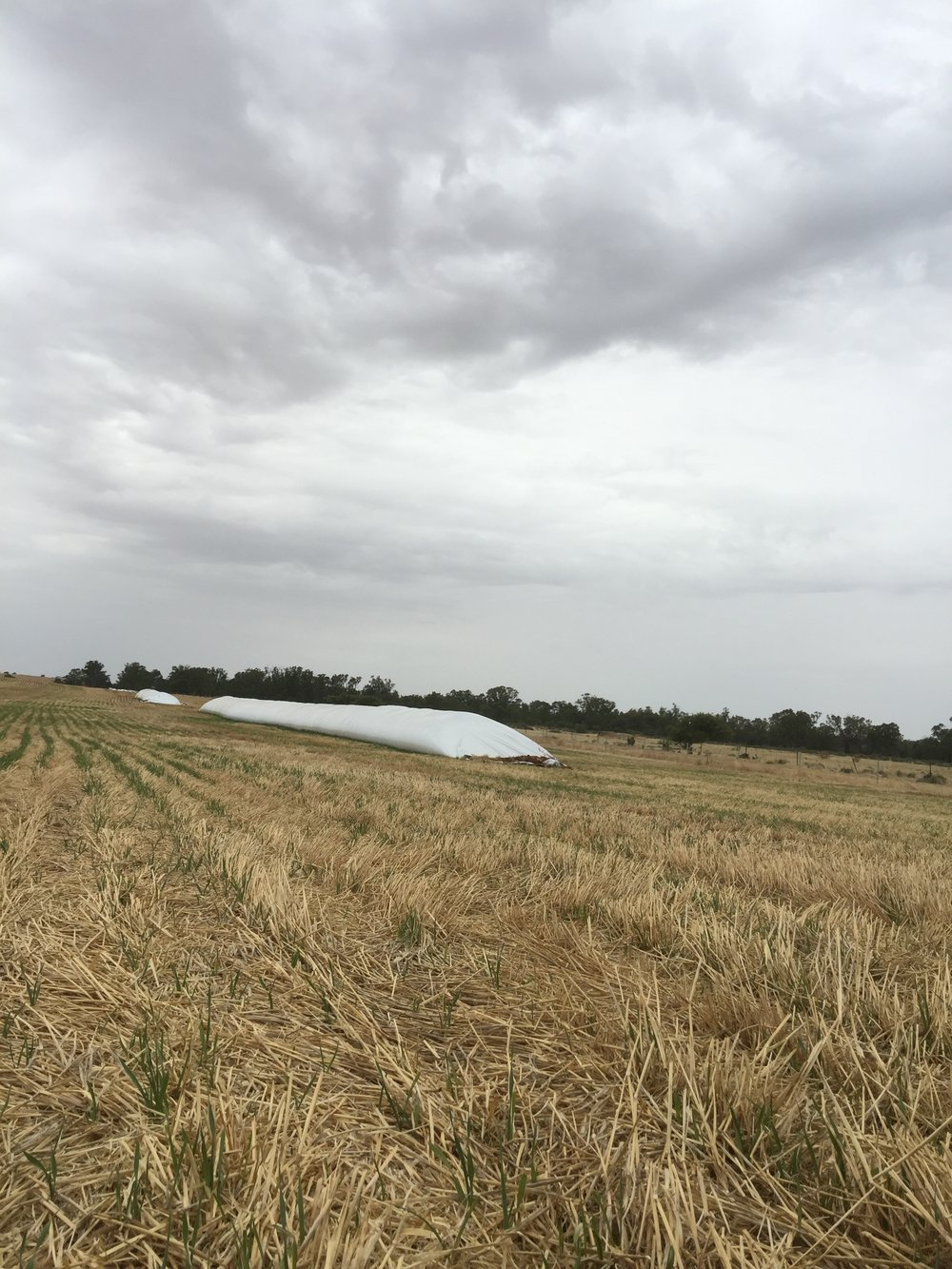 "Part of Rayali's work experience and internship involved visiting lots of farms, including grain farms: ""grain bags filled with grain right after harvest has finished. Grain bags are suited for short-term, high volume grains to assist with harvest logistics."""