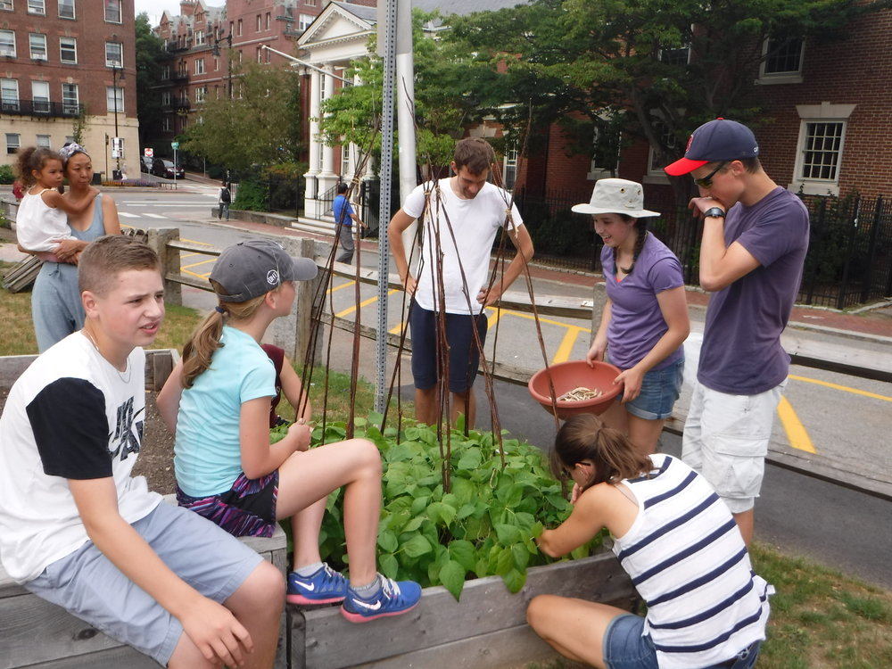 Rory showing her peers how to pick beans at the Harvard Community Garden.