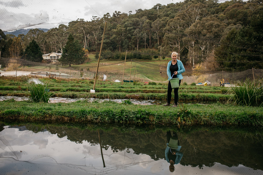 Sally Hall feeding trout, Mountain Fresh Trout and Salmon Farm, Harrietville (Victoria), 2017, Photographer: Catherine Forge, Source: Museums Victoria [MM 145578:  https://collections.museumvictoria.com.au/items/2241621] .