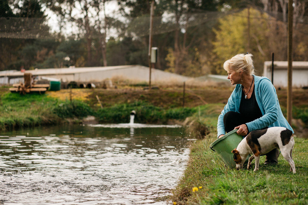 Sally Hall with her dog feeding salmon, Mountain Fresh Trout and Salmon Farm, Harrietville (Victoria), 2017, Photographer: Catherine Forge, Source: Museums Victoria.