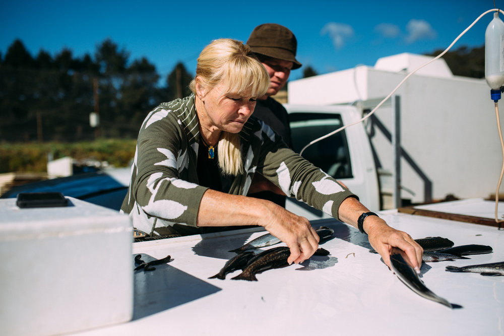 Sally and her son working with fish, Mountain Fresh Trout and Salmon Farm, Harrietville (Victoria), 2018, Photographer: Catherine Forge.