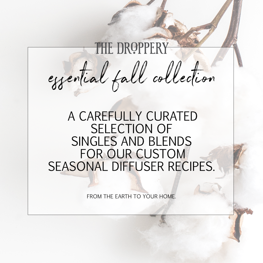 cover_essential_fall_collection_website.png
