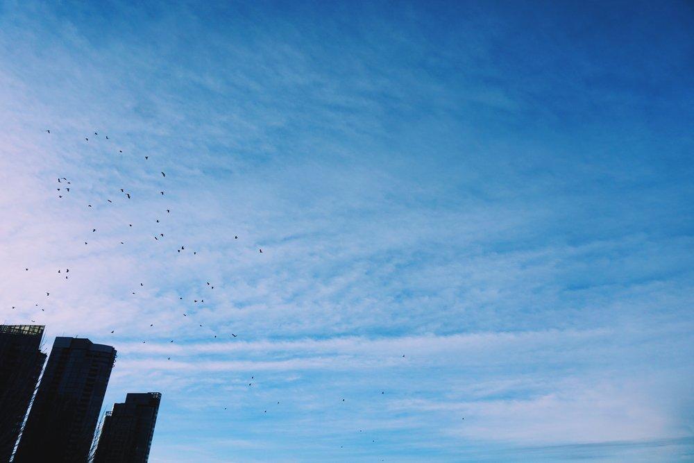 birdscoalharbor.jpg