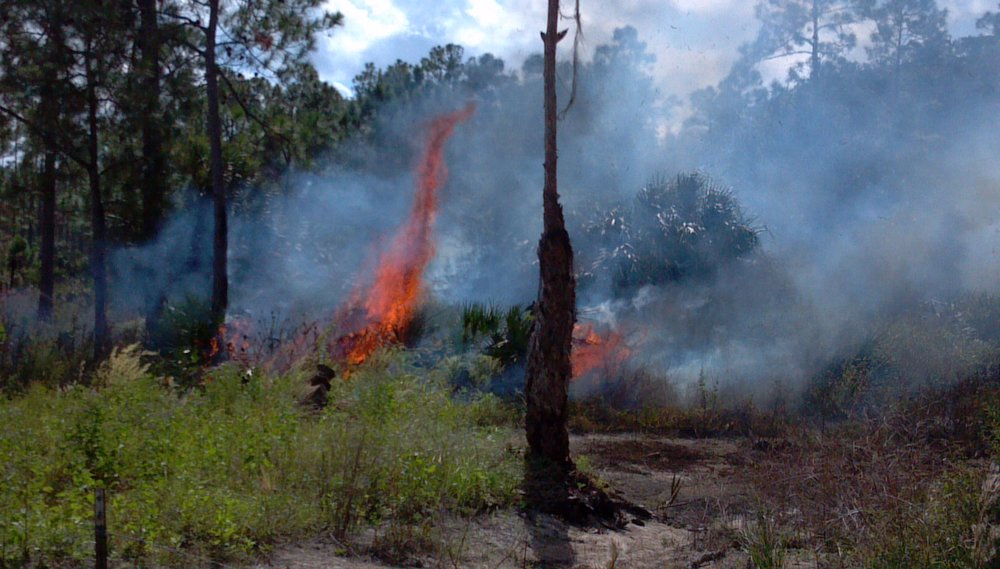 2013-10-31_12-02-05_343 prescribed fire.jpg