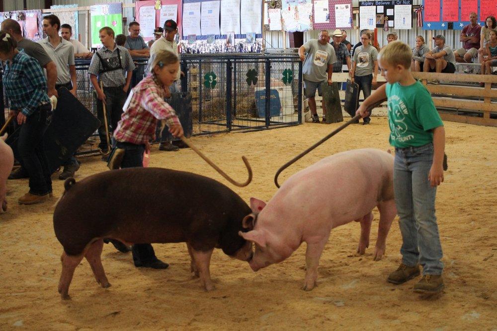 Swine Show-110.JPG