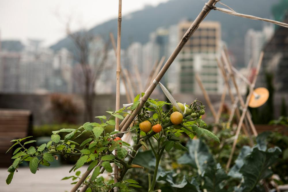 Hong_Kong_2795_Xaume_Olleros_29_Feb_2016_3.jpg
