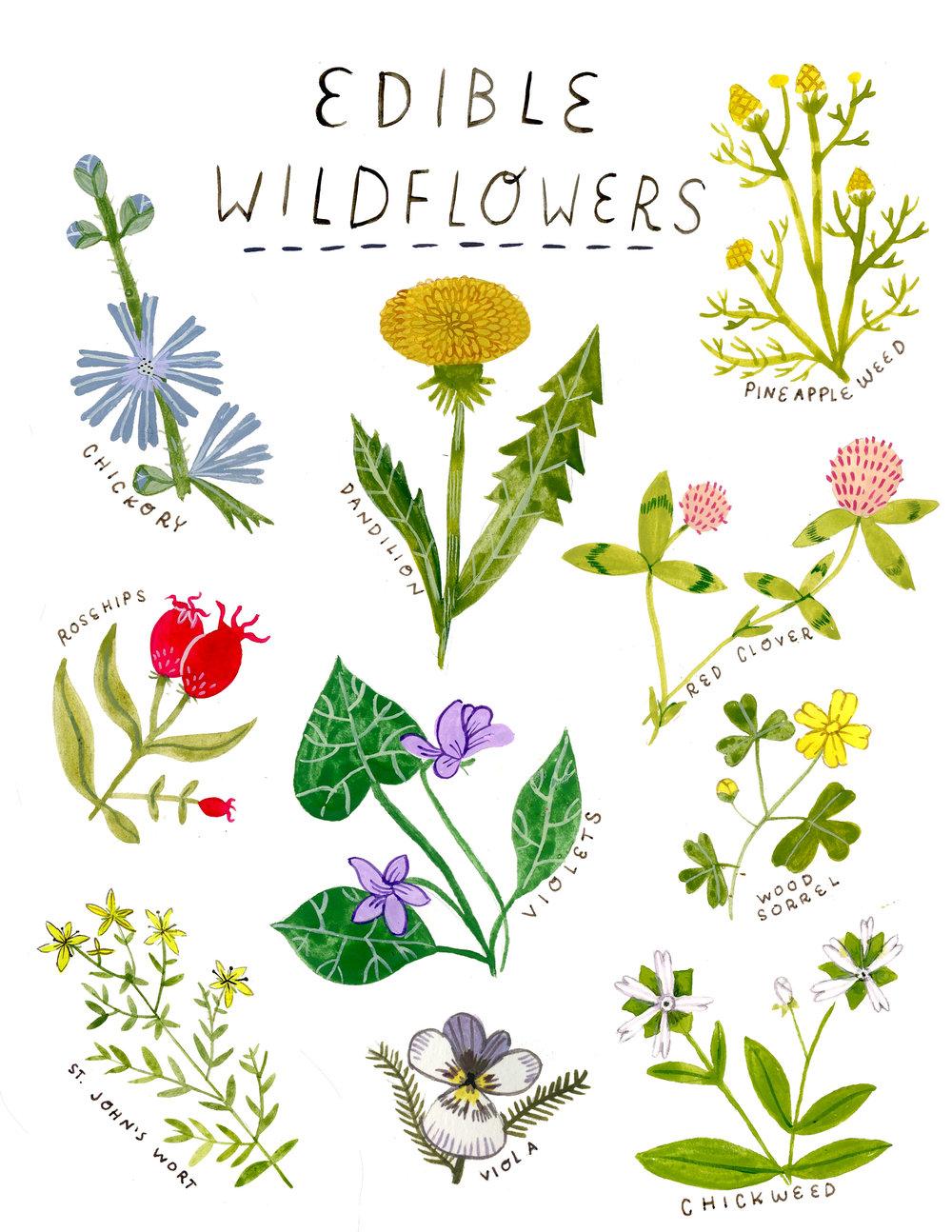 ediblewildflowers.jpg