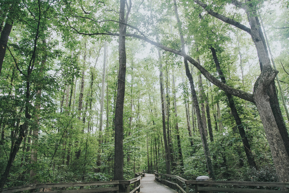 greensboro-nature