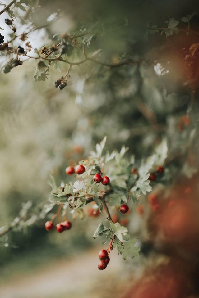 flowers-berry