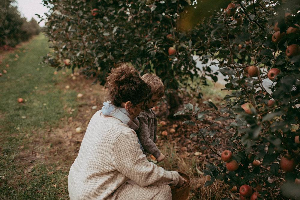 fall-apples
