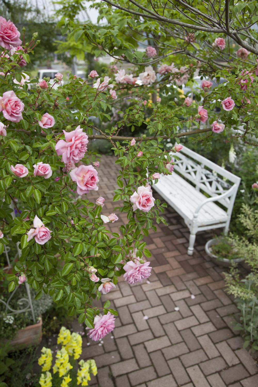 gardenfl039.jpg