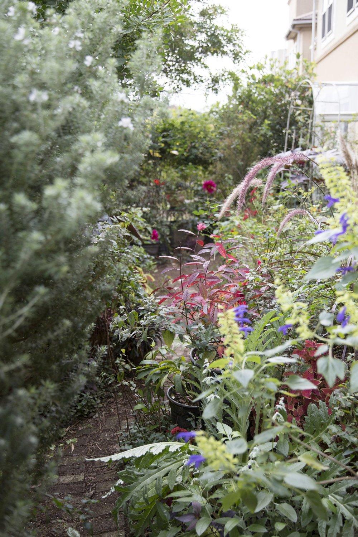 gardenfl047.jpg