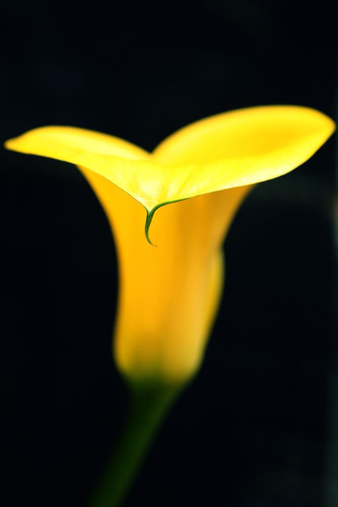 gardenfl050.jpg